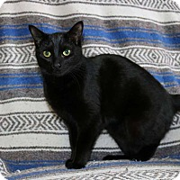 Adopt A Pet :: Jill - Lindsay, ON