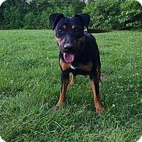 Adopt A Pet :: Tasha - Washington, DC