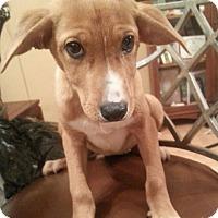 Adopt A Pet :: wizzie - Pompton Lakes, NJ