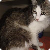Adopt A Pet :: Jersey - Ridgeland, SC