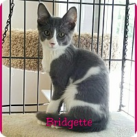 Adopt A Pet :: Bridgette - Atco, NJ