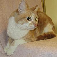 Adopt A Pet :: Whiskers - San Jose, CA