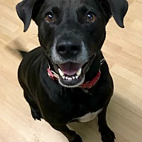 Adopt A Pet :: Joseph in CT - East Hartford, CT