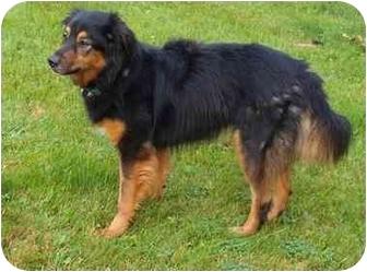 Collie Mix Dog for adoption in Toronto/Etobicoke/GTA, Ontario - Kiley