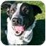 Photo 1 - Australian Cattle Dog Mix Dog for adoption in San Clemente, California - SALLY