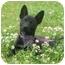 Photo 3 - Border Collie Mix Puppy for adoption in Portsmouth, Rhode Island - Alice