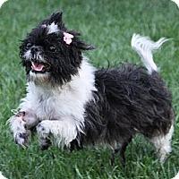 Adopt A Pet :: Daisy - Richmond, VA