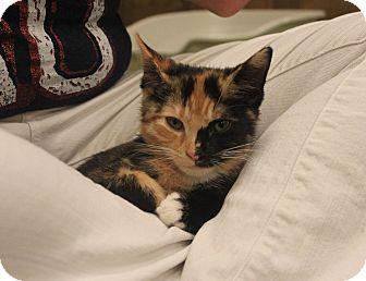 Calico Kitten for adoption in Smyrna, Georgia - Calliope
