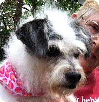 Terrier (Unknown Type, Medium) Mix Dog for adoption in Winder, Georgia - Barbi