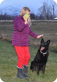German Shepherd Dog Dog for adoption in Hamilton, Montana - Baron