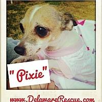 Adopt A Pet :: Pixie - Seaford, DE