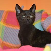 Adopt A Pet :: Yema - East Smithfield, PA