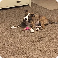 Adopt A Pet :: June - Broken Arrow, OK