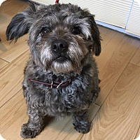 Adopt A Pet :: Ramsey - Redondo Beach, CA