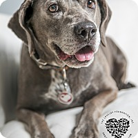 Adopt A Pet :: Molly - Inglewood, CA