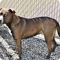Adopt A Pet :: Shila - Lincolnton, NC