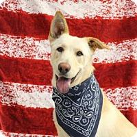 Adopt A Pet :: Gucci - Yucaipa, CA