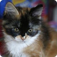 Adopt A Pet :: Bee - San Jose, CA