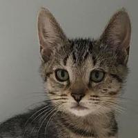 Adopt A Pet :: Peach - Red Bluff, CA