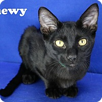 Adopt A Pet :: Chewy - Carencro, LA