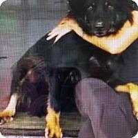 Adopt A Pet :: Bundaberg - Freeport, NY