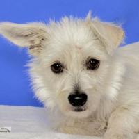 Adopt A Pet :: Anthony - Yakima, WA