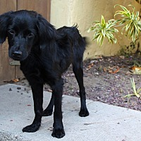 Adopt A Pet :: Teo - from Costa Rica - Los Angeles, CA