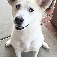 Adopt A Pet :: Gabby - Roswell, GA