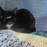 Adopt A Pet :: DOT - Winter Haven, FL
