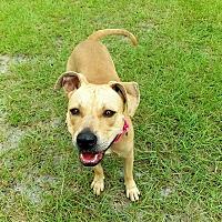 Adopt A Pet :: Freedom - Umatilla, FL