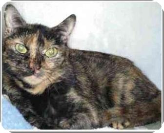 Domestic Shorthair Cat for adoption in San Clemente, California - MARIBELL