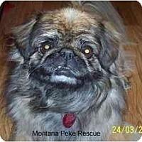 Adopt A Pet :: Noah- ADOPTED - Columbia Falls, MT