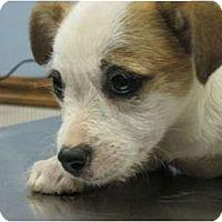 Adopt A Pet :: ID 540 - Essex Junction, VT