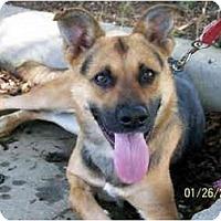 Adopt A Pet :: Anke - Pike Road, AL