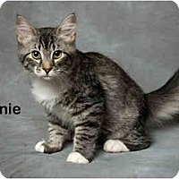 Adopt A Pet :: Arnie - Portland, OR