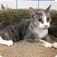 Adopt A Pet :: Kieu - Newport Beach, CA