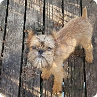Adopt A Pet :: Georgie - ADOPTED!! - Antioch, IL