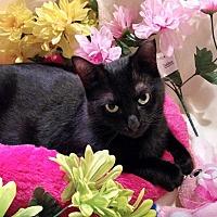 Adopt A Pet :: Camille - Houston, TX
