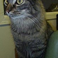Adopt A Pet :: Elsa Mae - Hamburg, NY