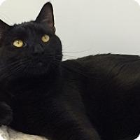 Adopt A Pet :: River - Colorado Springs, CO