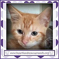 Adopt A Pet :: Huey - Southport, FL