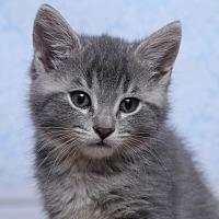 Adopt A Pet :: Niko - Chippewa Falls, WI