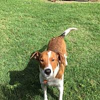 Adopt A Pet :: Maggie - Woodstock, GA