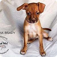 Adopt A Pet :: Marsha Brady - Shawnee Mission, KS