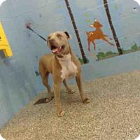 Adopt A Pet :: URGENT on 7/26 SAN BERNARDINO - San Bernardino, CA