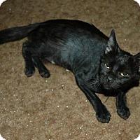 Adopt A Pet :: WEDNESDAY - Modesto, CA