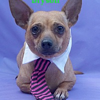 Adopt A Pet :: Bryson - Wellington, FL