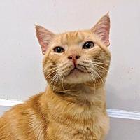 Adopt A Pet :: Tormund - Marlborough, MA