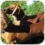 Photo 4 - Dachshund Dog for adoption in Garden Grove, California - Charlotte