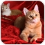 Photo 4 - Domestic Shorthair Cat for adoption in Nashville, Tennessee - Hilary